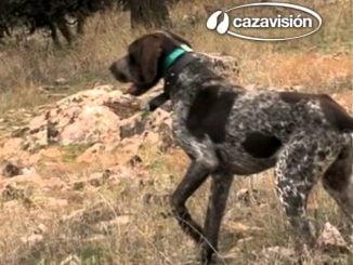 Cazavision