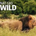 Nat Geo Wild celebra once años de emisiones